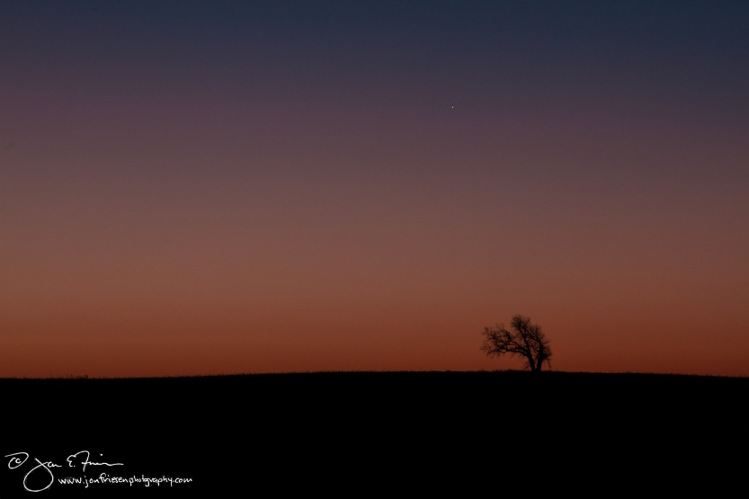 Lone Tree at Dawn-1634
