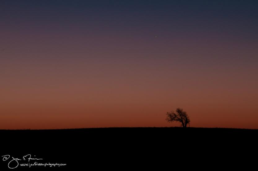 Lone Tree at Dawn-1634