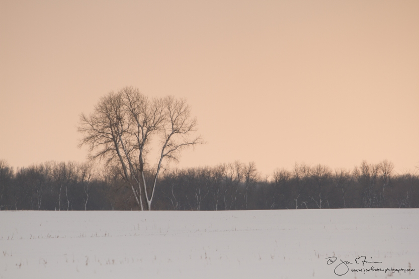 F13 006 Tree in Snowy Field-1842