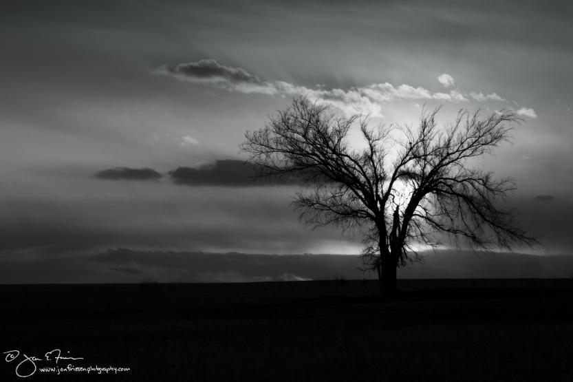 Flint Hills Lone Tree-1772