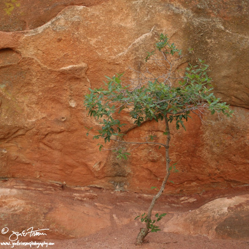 Red Rock Canyon-0089