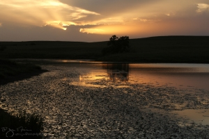 Flint Hills Summer Evening at the Pond II-6455