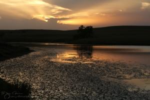 Flint Hills Summer Evening at the Pond II-6455