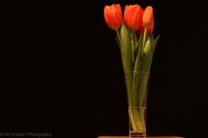 Tulips-6778