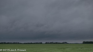 Spring Wheat Field-2586