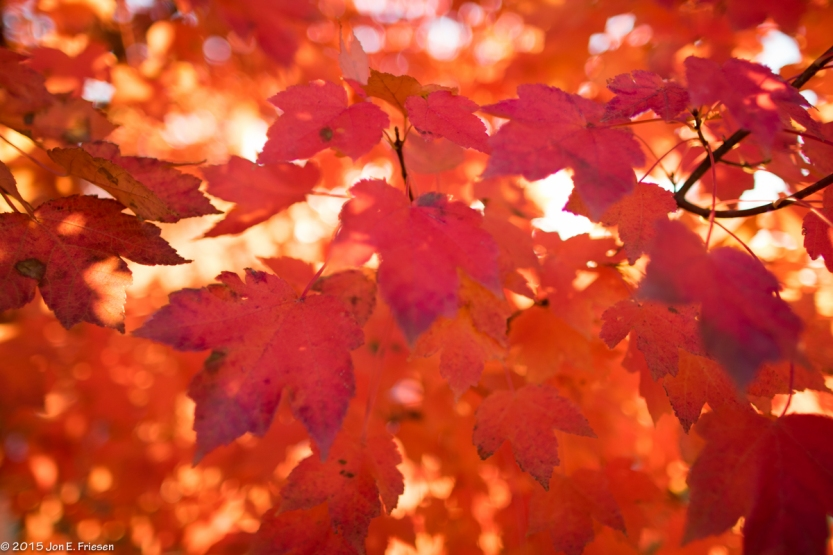 Fall Sunlight-1017