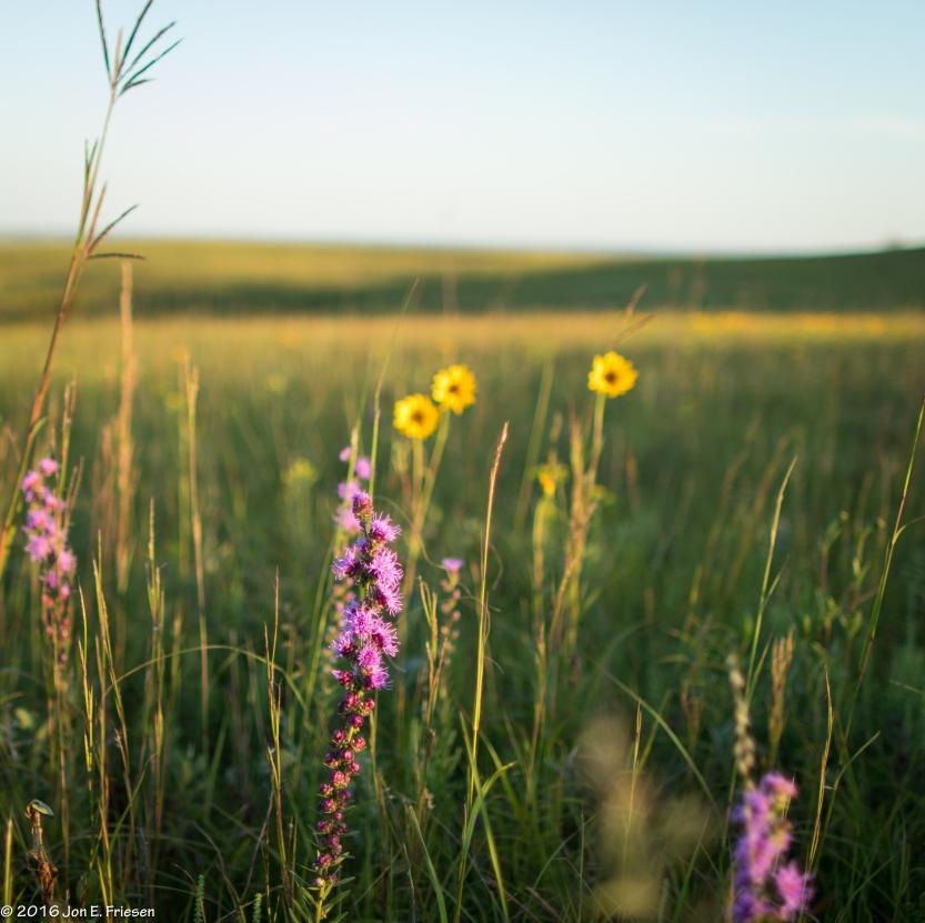 Teter Rocks Prairie-3436